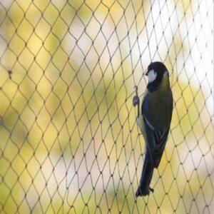 bird-net2