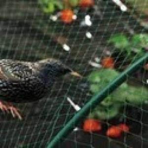 bird-net3