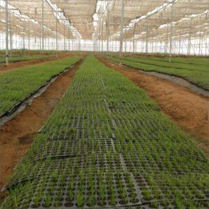 plant-growth