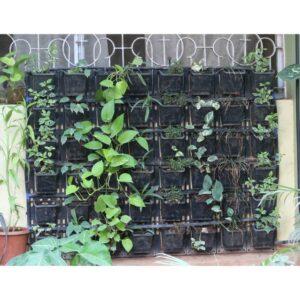vertical-garden2